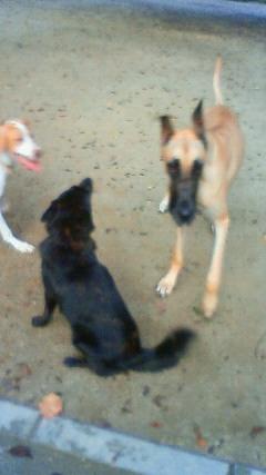 甲斐犬 カイの日記  2009,09,05 <br />  その二