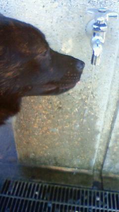 甲斐犬 カイの日記  2009,09,06