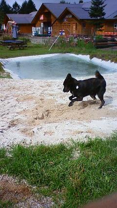 甲斐犬カイの日記  2009,10,01