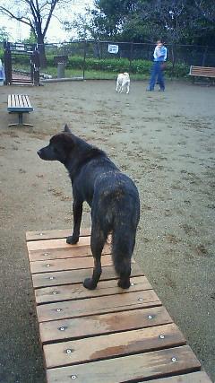 甲斐犬カイの日記  2009,10,02
