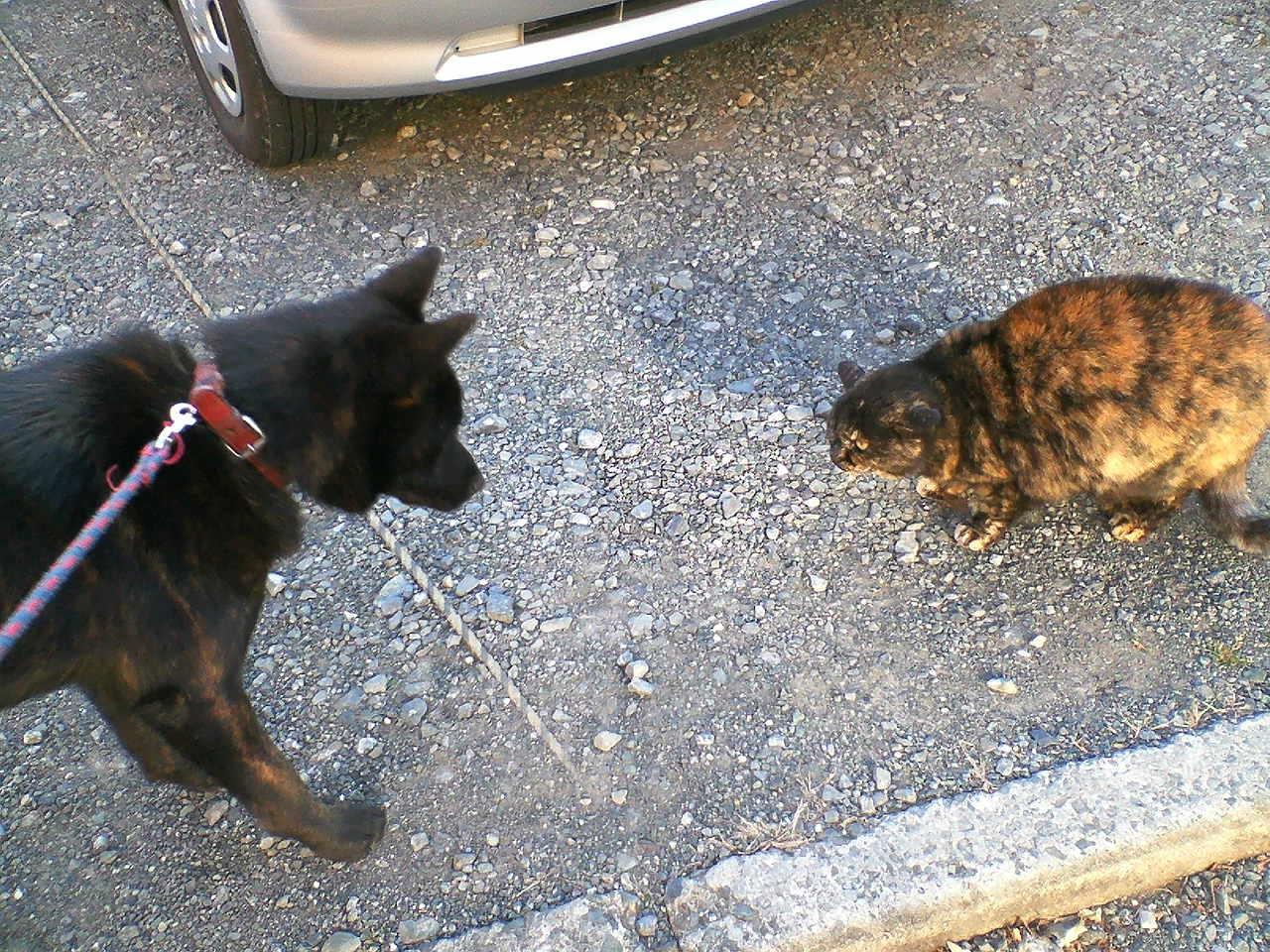 甲斐犬カイの日記2010 2.8