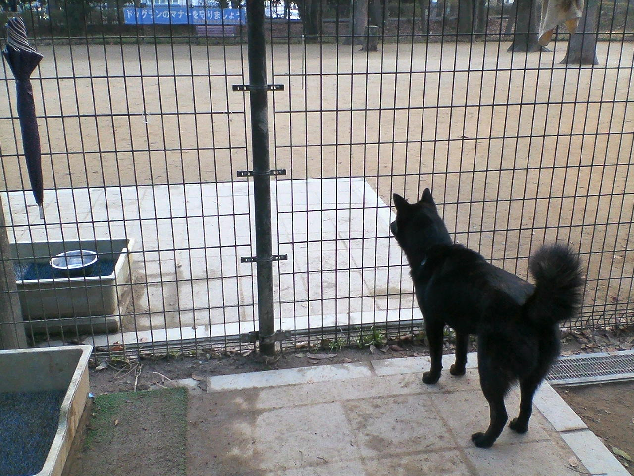 甲斐犬カイの日記  2010 02.24